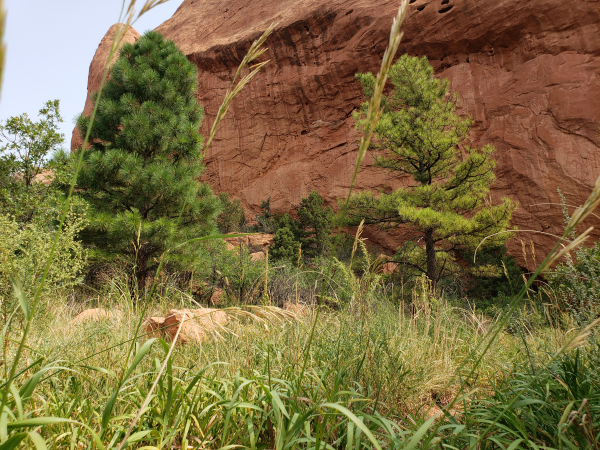 Ears of wild grass sways in the wind, juniper pines and other conifer tres in the background, leaning against a massive red sandstone formation. It is as if God himself placed the massive wall of stone there.